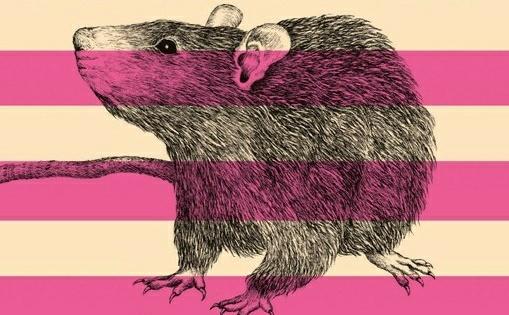 """""""Różowa mysz"""" – współczesna baśń o Rosji"""